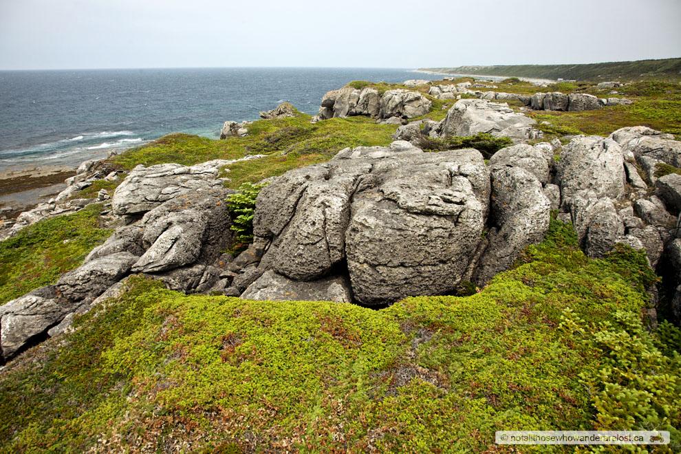 The Coast of Newfoundland